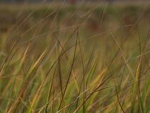 Gras met colorfullachtergrond stock foto's