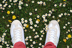 Gras met daisys Royalty-vrije Stock Fotografie