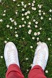 Gras met daisys Stock Afbeeldingen