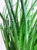 Gras met dauw royalty-vrije stock afbeeldingen