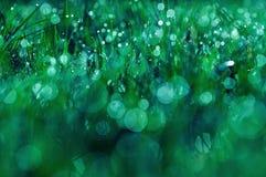 Gras met dauw dichte omhooggaand bij nacht Royalty-vrije Stock Afbeelding