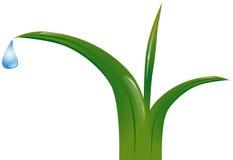 Gras met dauwdalingen stock illustratie