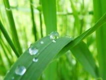 Gras met de Dalingen van de Dauw stock fotografie