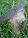 Gras met droog blad Stock Fotografie