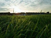 Gras met een dauw op het vroeg in de ochtend Stock Fotografie
