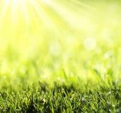 Gras met groene bokeh Stock Afbeeldingen