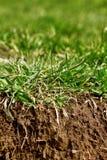 Gras met grond Stock Afbeelding