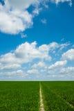 Gras met hemel Stock Foto