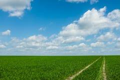 Gras met hemel Stock Afbeeldingen