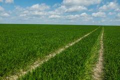 Gras met hemel Stock Fotografie
