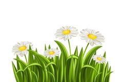Gras met madeliefje stock illustratie