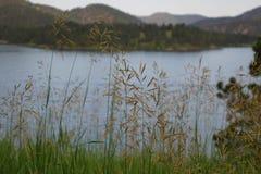 Gras met meer op de achtergrond stock fotografie