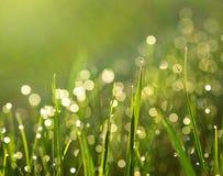 Gras met regendalingen Stock Afbeelding