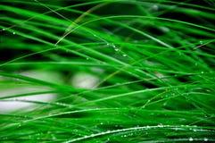 Gras met regendruppels Royalty-vrije Stock Afbeelding