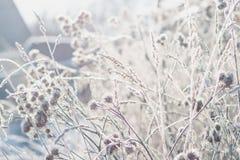 Gras met rijp tegen de achtergrond van de zon die van de de winterochtend wordt behandeld royalty-vrije stock fotografie