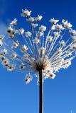 Gras met sneeuwvlok bij de winter royalty-vrije stock fotografie