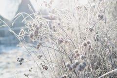 Gras met vorst tegen de achtergrond van de zon die van de de winterochtend wordt behandeld stock foto's