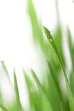 Gras met waterdalingen Stock Foto