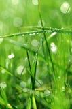 Gras met waterdalingen stock fotografie