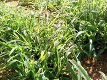 Gras met waterdalingen Stock Afbeelding