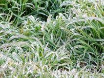 Gras met waterdalingen royalty-vrije stock afbeelding