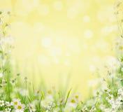 Gras met witte bloemen, vage aardachtergrond, Stock Fotografie