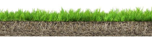 Gras met wortels en grond Stock Foto's