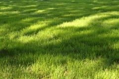 Gras met zonnige vlekken Stock Afbeeldingen