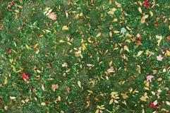 Gras mit Blättern Stockbild