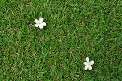 Gras mit Blume Stockbilder