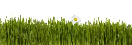 Gras mit Blume stockfoto