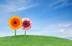 Gras mit Blumen lizenzfreie stockbilder