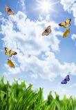 Gras mit Blumen und Schmetterlingen Lizenzfreie Stockfotos