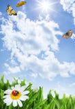 Gras mit Blumen und Schmetterlingen Stockfotos