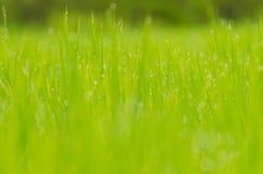 Gras mit bokeh Lizenzfreies Stockfoto