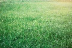 Gras mit dem Abend Sun Lizenzfreie Stockbilder