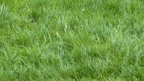 Gras mit dem Wind stock video footage