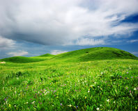 Gras mit einem blauen Himmel Stockfotos