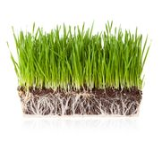 Gras mit Erde stockbild