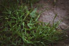Gras mit etwas Wasser lizenzfreie stockfotos