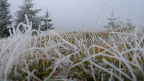 Gras mit Frost stock footage