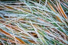 Gras mit Frost lizenzfreies stockfoto
