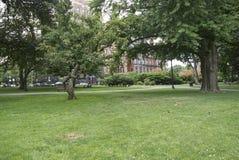 Gras mit Gebäude im Abstand Lizenzfreie Stockbilder