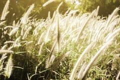 Gras mit hellem Licht Lizenzfreies Stockfoto