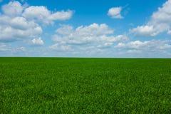 Gras mit Himmel lizenzfreie stockfotos