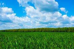 Gras mit Himmel lizenzfreies stockfoto
