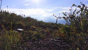 Gras mit Löwenzahnblumen, blauem Himmel und Sonnenstrahlen Blauer Himmel, weiße Wolken szene Unter dem gelben Gras sonnig stock video footage