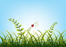 Gras mit Marienkäfer vektor abbildung