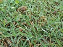Gras mit Morgentau lizenzfreie stockfotos