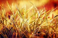 Gras mit orange Hintergrund Stockbilder